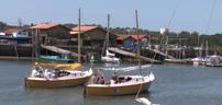 Les tilloles au port de La Teste