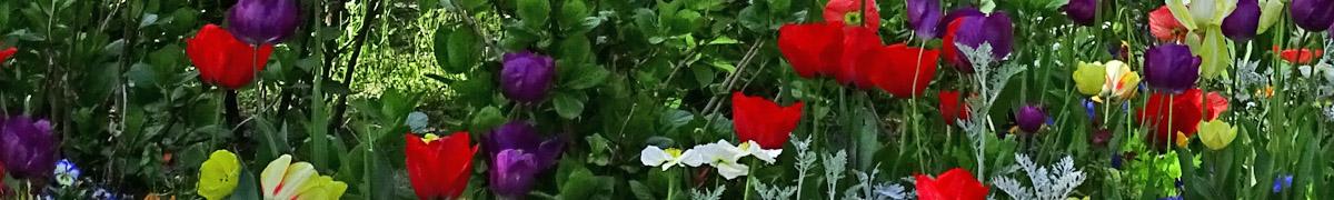 Déco, fleurs et cadeaux au Pyla sur mer et au Moulleau