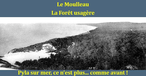 Chapitre 2 le moulleau et la for t usag re - Les pins du moulleau ...