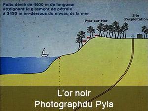 L'or noir du Pyla sur mer